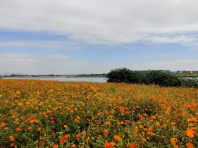 芦苞九曲河花海生态公园