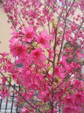 你我邂逅在那樱花树下。。。