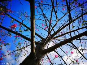 蓝蓝天空高挂我的梦。。。。