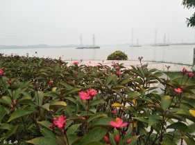 云东海桂花岛
