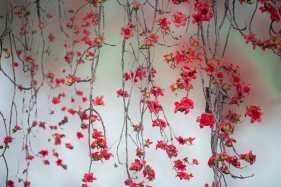 木棉花 在木棉树下,遥望那些高高挂在枝头的花朵,艳