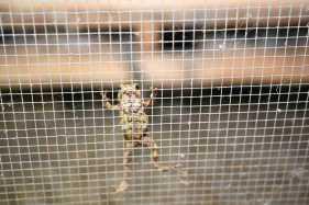 蛇口余生……记禁食野生动物人工繁育主体