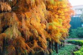 自然如画,小树林又红了……