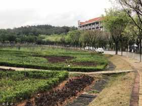 植树节~来点绿意~勤劳是春天的颜色