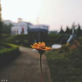 这叫什么花